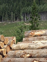 Felled Forest